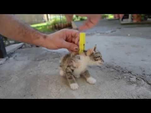 Cats doing amazing tricks