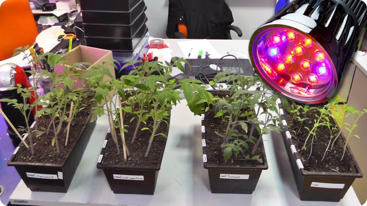 Выращивание рассады под лампой 40