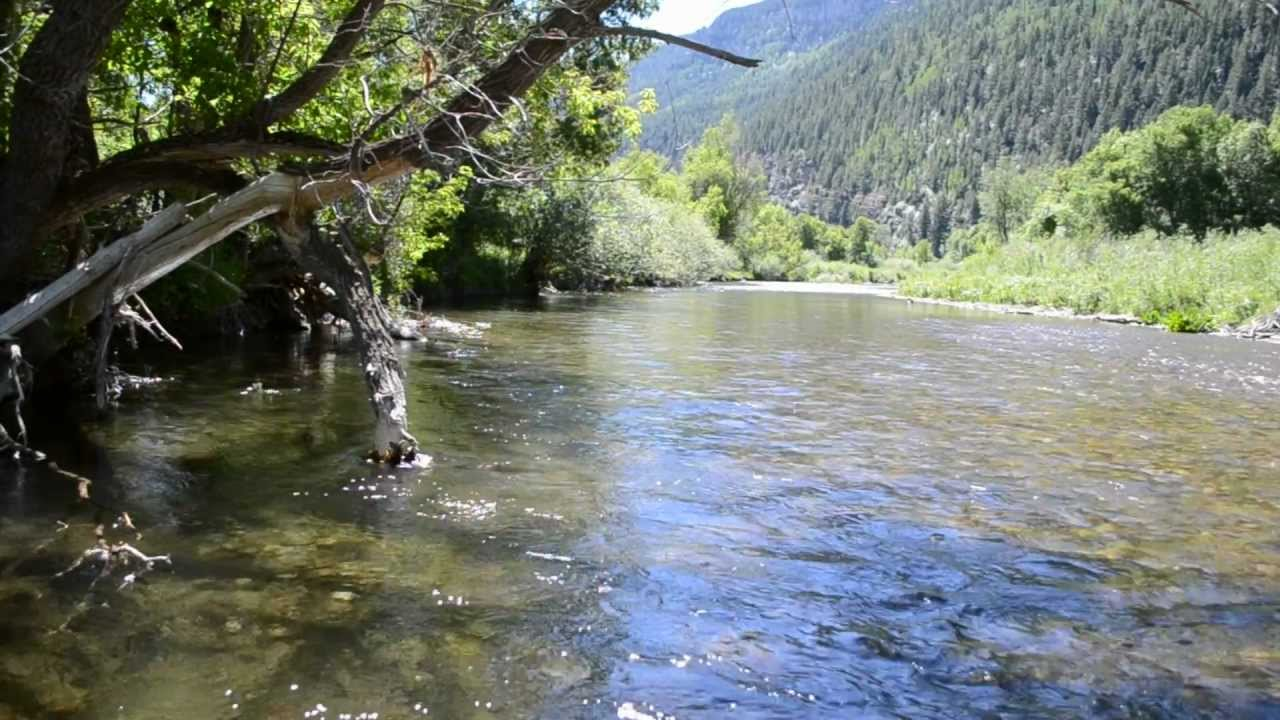 Fly fishing the white river colorado info video youtube for Buy colorado fishing license