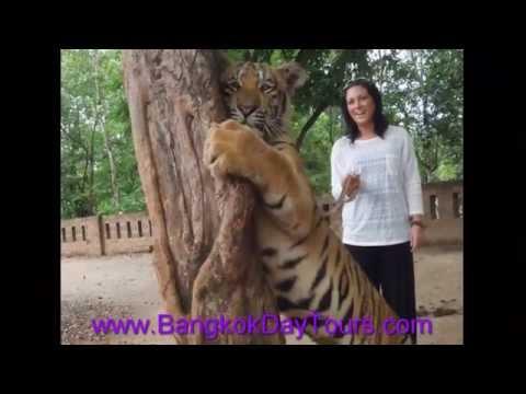 Tiger Temple Kanchanaburi Tour by Bangkok Day Tours MSM travel