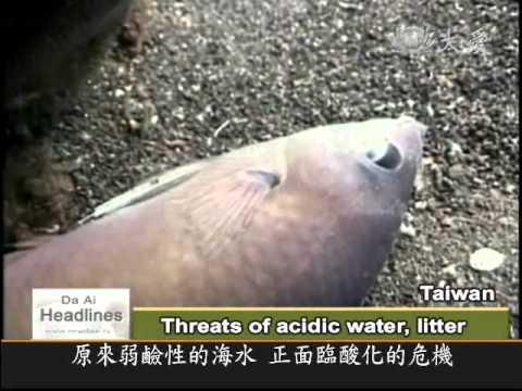 DaAiTV_DaAi Headlines_20110117_Eco crisis at sea