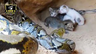 🔥Top 8 Greatest Battles In The Animal World | 1001 Animals