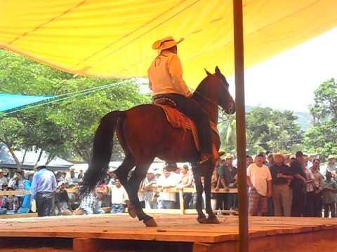 caballos bailadores la huacana 2012
