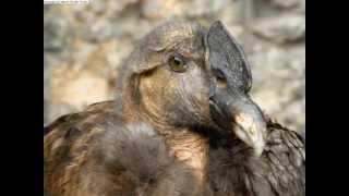 Cooking | El Condor de los Andes...wmv | El Condor de los Andes...wmv