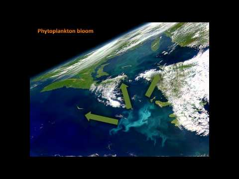 Why are phytoplankton crucial in a changing climate?