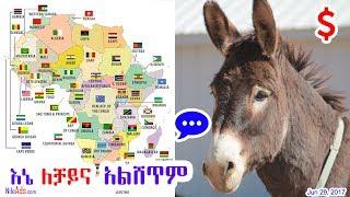 Africa: እኔ አህያ ለቻይና አልሸጥም - ቦትስዋና ዚምባብዌ ኢትዮጵያ - Donkey not for China - DW