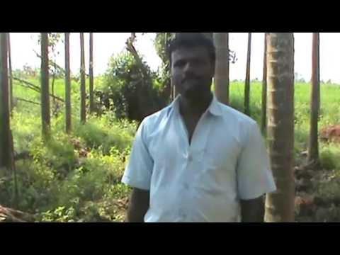 Greenplanetindia : Organic farming nitroking , fc, neempaste in feild in Kannada