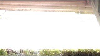Direct Lightning Strike Tampa Florida Close Lightning