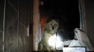 Dog rescue: Goldie and Romeo (Part 1 of 2) - (By Eldad Hagar)