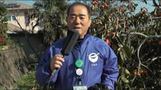 復活!あんぽ柿作り体験! NEWS