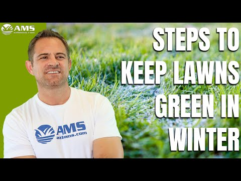 How To Keep Your Winter Lawn Green In Phoenix