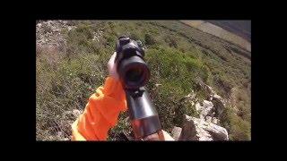 Chasse au sanglier en corse du sud 2016 - wild boar hunting in france HD