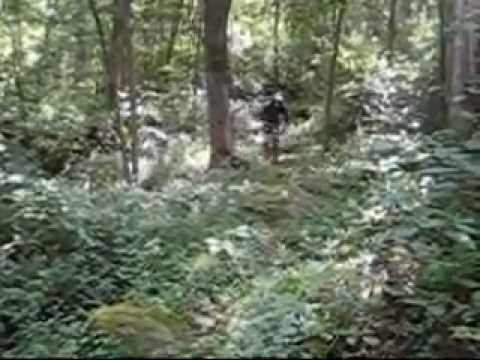 FreeRide-DownHill 2011 .wmv