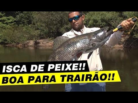 Dica: como pescar trairão com isca de peixe. ( www.magazinedopescador.com.br)