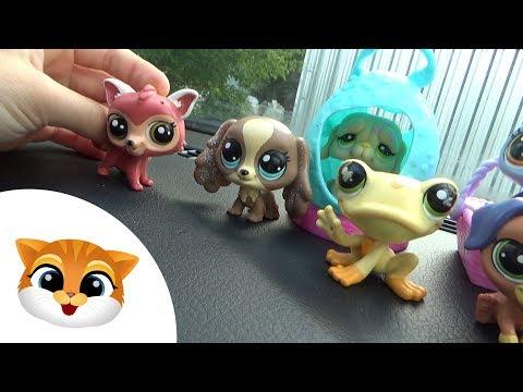 Pet Shop Week #12 - LPS Jadą Na Wakacje   Movies For Children
