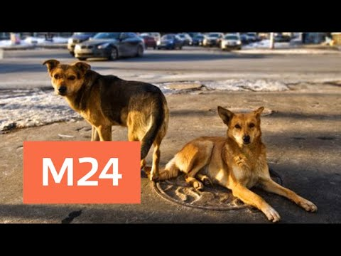 Загрызших человека в Подмосковье собак могут выпустить на волю - Москва 24