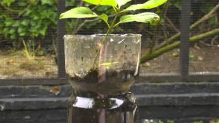 Plant seedlings with their plastic bottle
