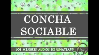CONCHA SOCIABLE - Los Mejores Audios De WhatsApp