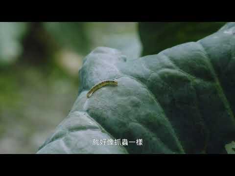 【老農篇】台語 30s