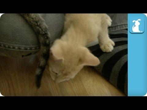 KITTENS ATTACK KITTEN TAILS! – Kitten Love