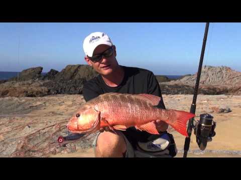 JANSEN Cabo Surf Fishing part 1