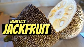 Tasting Jackfruit & How to Open It