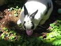 Easter Bunny hunts for eggs