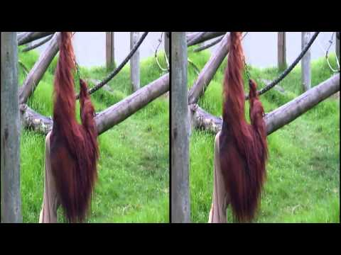 Auckland Zoo Highlights in 3D