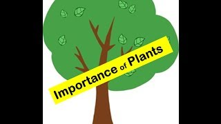 Importance of Plants to humans and animals in everyday's life