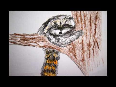 Waschbär zeichnen Tiere malen - to draw a racoon - Как нарисовать енота - 动物画
