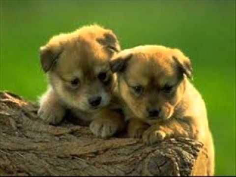 Pieski male dwa
