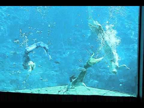Weeki Wachee State Park - Mermaid Show