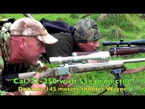 0 Hunting Fallow deer in New Zealand#62