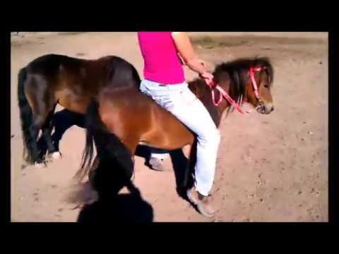 Girl Breaking Mini Horse/Pony Riding