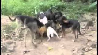obediencia canina I.wmv