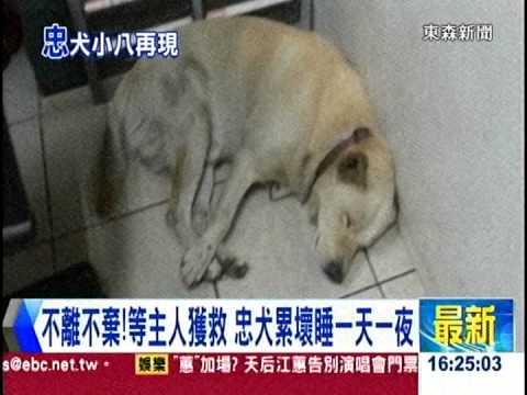 [東森新聞HD]回家才敢放心狂睡...  忠犬伴失智翁30小時