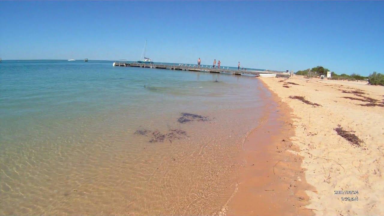Shark Bay Facts Monkey Mia Shark Bay
