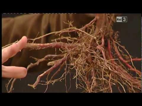 Geo&Geo: Daniele Zanzi, le radici degli alberi e la messa a dimora