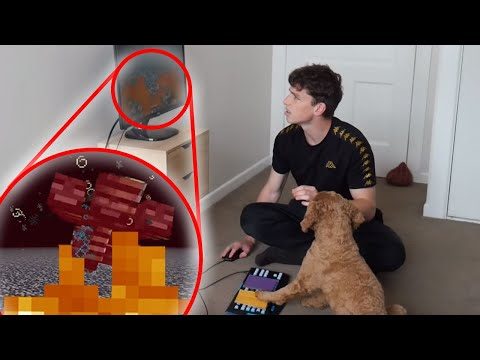 My Dog Defeats The Wither Boss in Minecraft