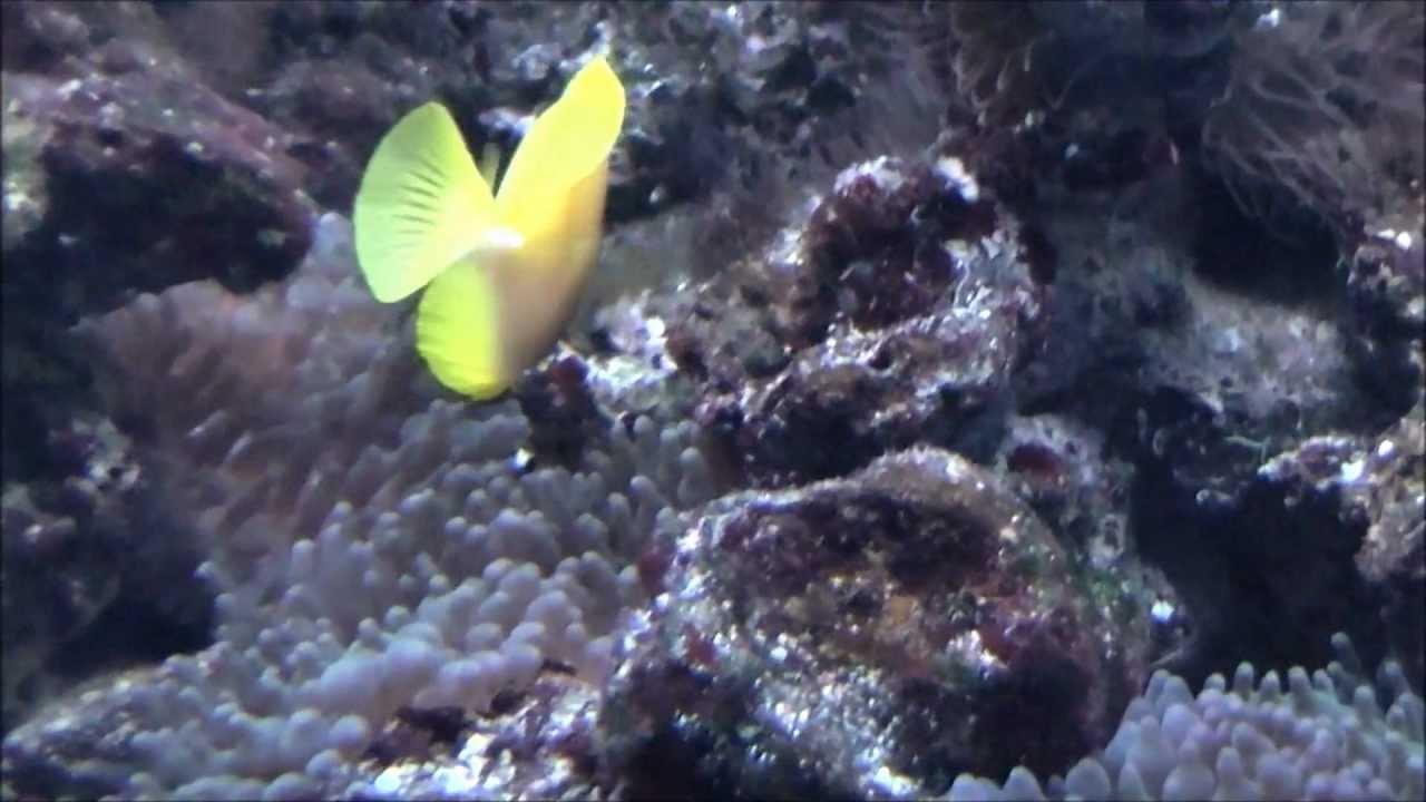 Visite de l Aquarium de Wasserbillig - Full-HD - YouTube