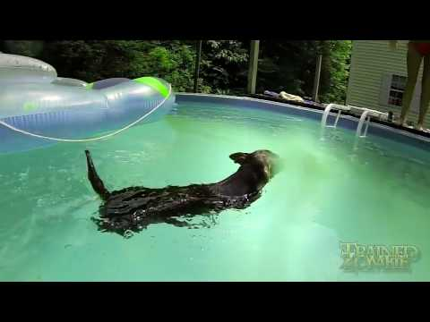 Sexy Girl And Chihuahua Diving And Swimming Gopro Hero3 Black Edition video