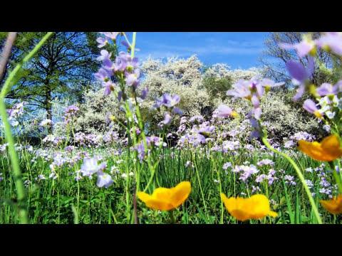 Vivaldi - La Primavera - Spring - Printemps -Las cuatro estaciones-Salzburger Kammerorchester