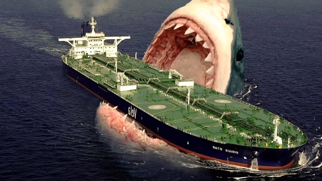 Biggest shark
