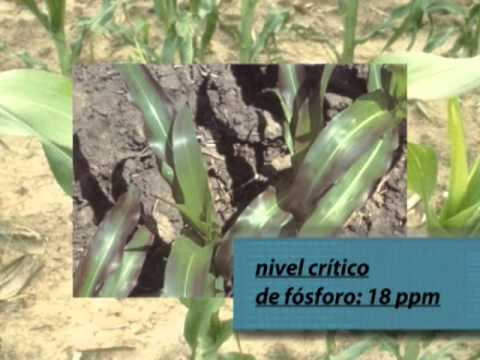 Agosto 2007. Fertilización de Maíz