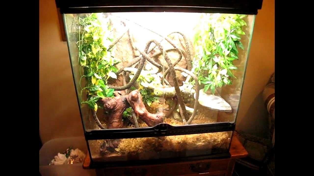 Crested Gecko Setup Youtube