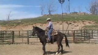 The first steps for teaching a horse to side pass. David Lee Archer