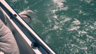 :: Sport Fishing TV :: Shark & Sawfish