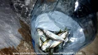 Gece istavrit avı - Şamandıralı istavrit avı - SUNUCUM 33 BÖLÜM