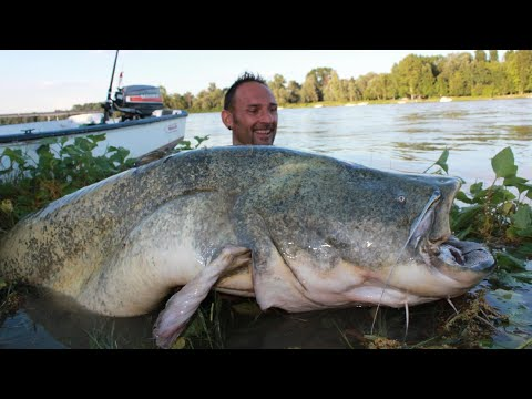 http://www.catfishing-around-the-world.eu SUPER GIORNATA DI PESCA A SPINNING SUL GRANDE FIUME CON MICHAEL by YURI GRISENDI.