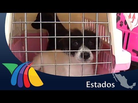Desde hace cuatro años se dedica a rescatar perros abandonados | Noticias de Torreón